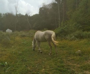 Horse-Field